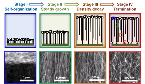 Collective Mechanism for the Evolution and Self-Termination of Vertically Aligned Carbon Nanotube Growth Copy