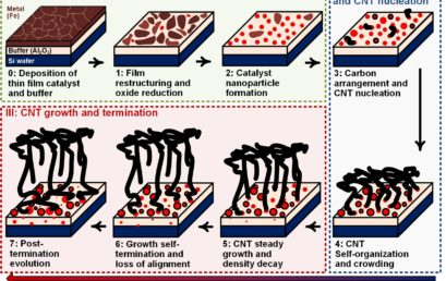 Data-Driven Understanding of Collective Carbon Nanotube Growth by In Situ Characterization and Nanoscale Metrology