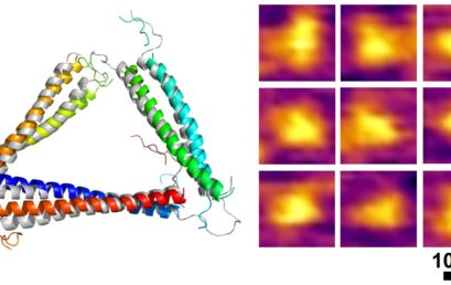 Modular assembly of a protein nanotriangle using orthogonally interacting coiled coils