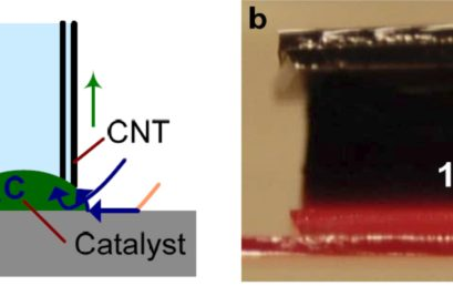 Collective Mechanisms Limiting the Indefinite Growth of Carbon Nanotube Assemblies